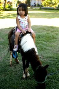 paradizoo_miniature-horse