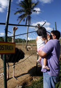 paradizoo_ostrich